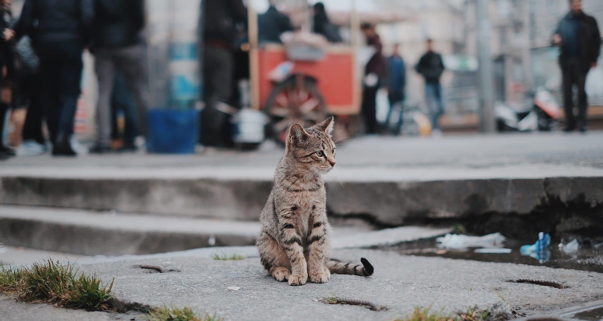 pet adoption statistics - featured image