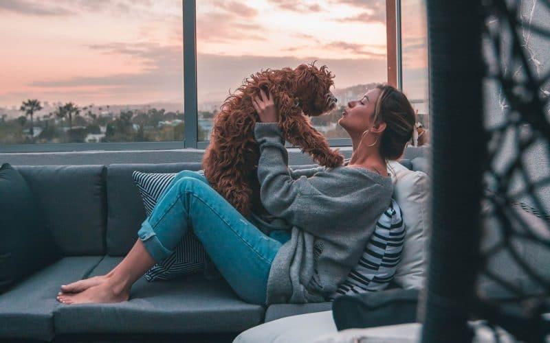 pet ownership statistics - featured image