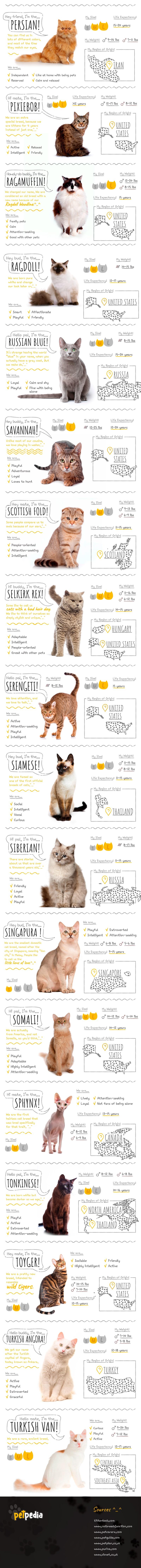 Adopting the right cat - 50 most popular cat breeds (2)