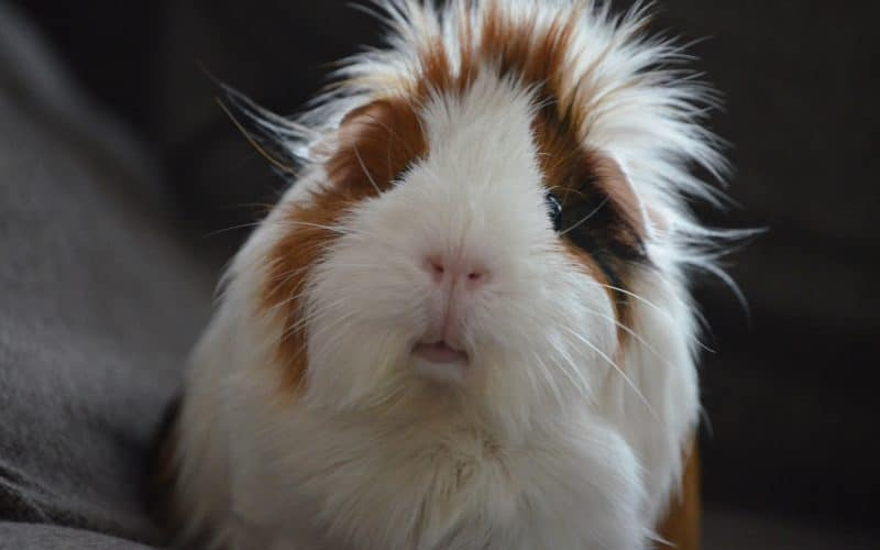 Animal Testing Statistics - Featured Image
