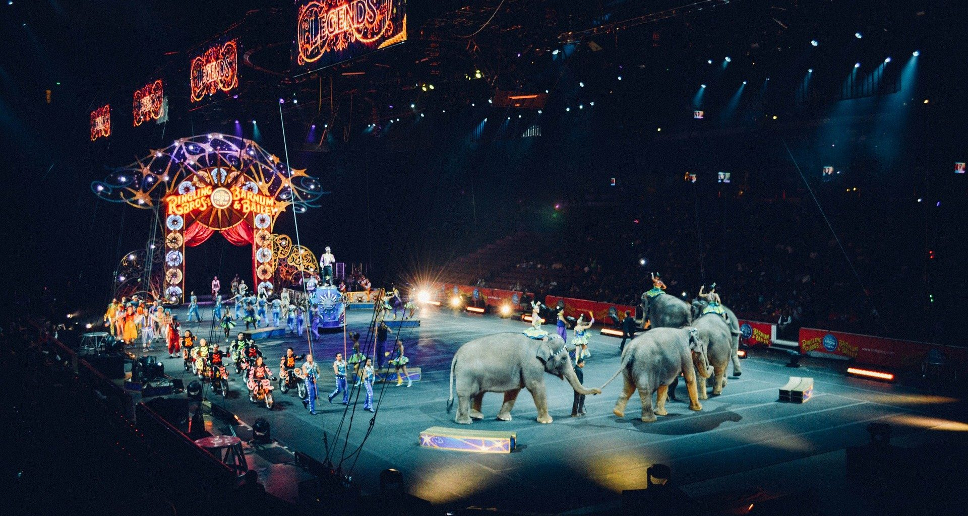circus animals - featured image