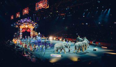circus animals - featured image