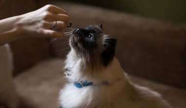 domestication of cats - featured image