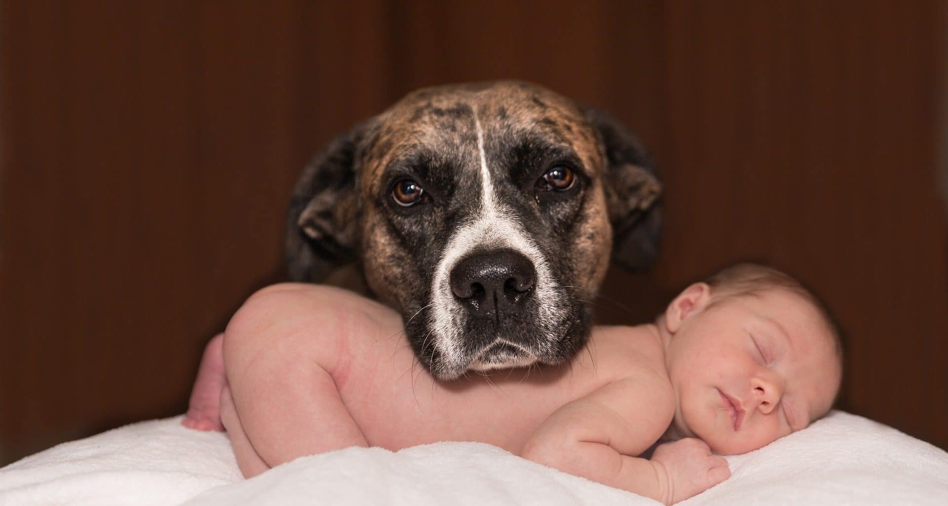 dogs and babies - featured image