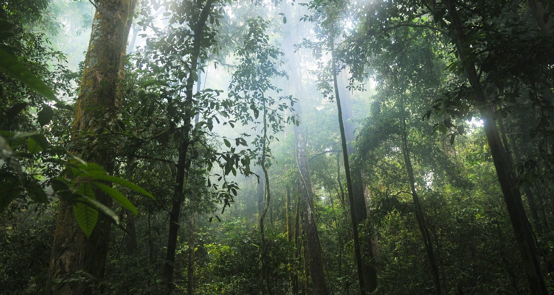 rainforest facts - featured image