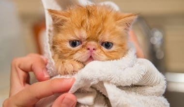 cat grooming - featured image