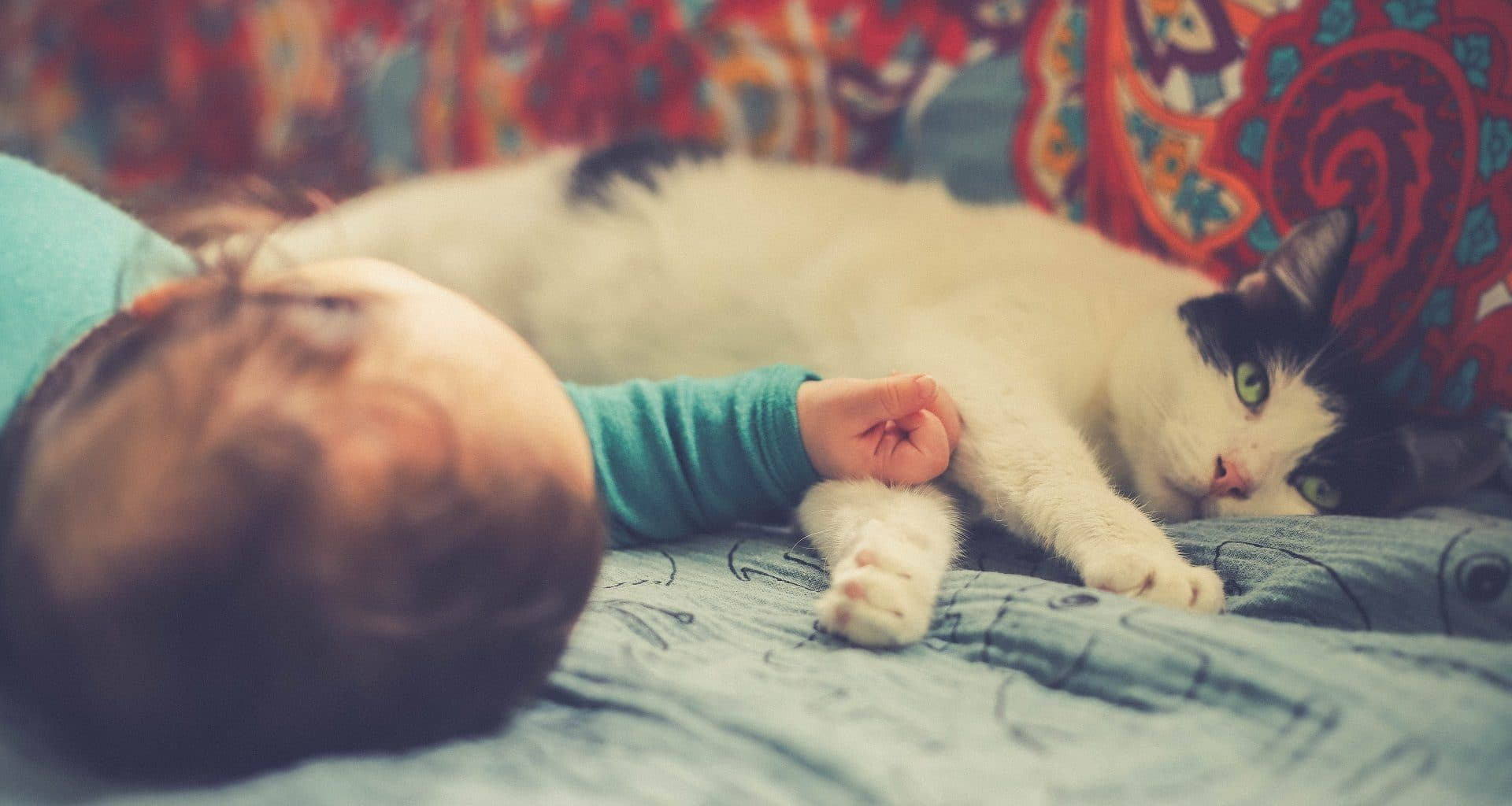 cats and babies - featured image