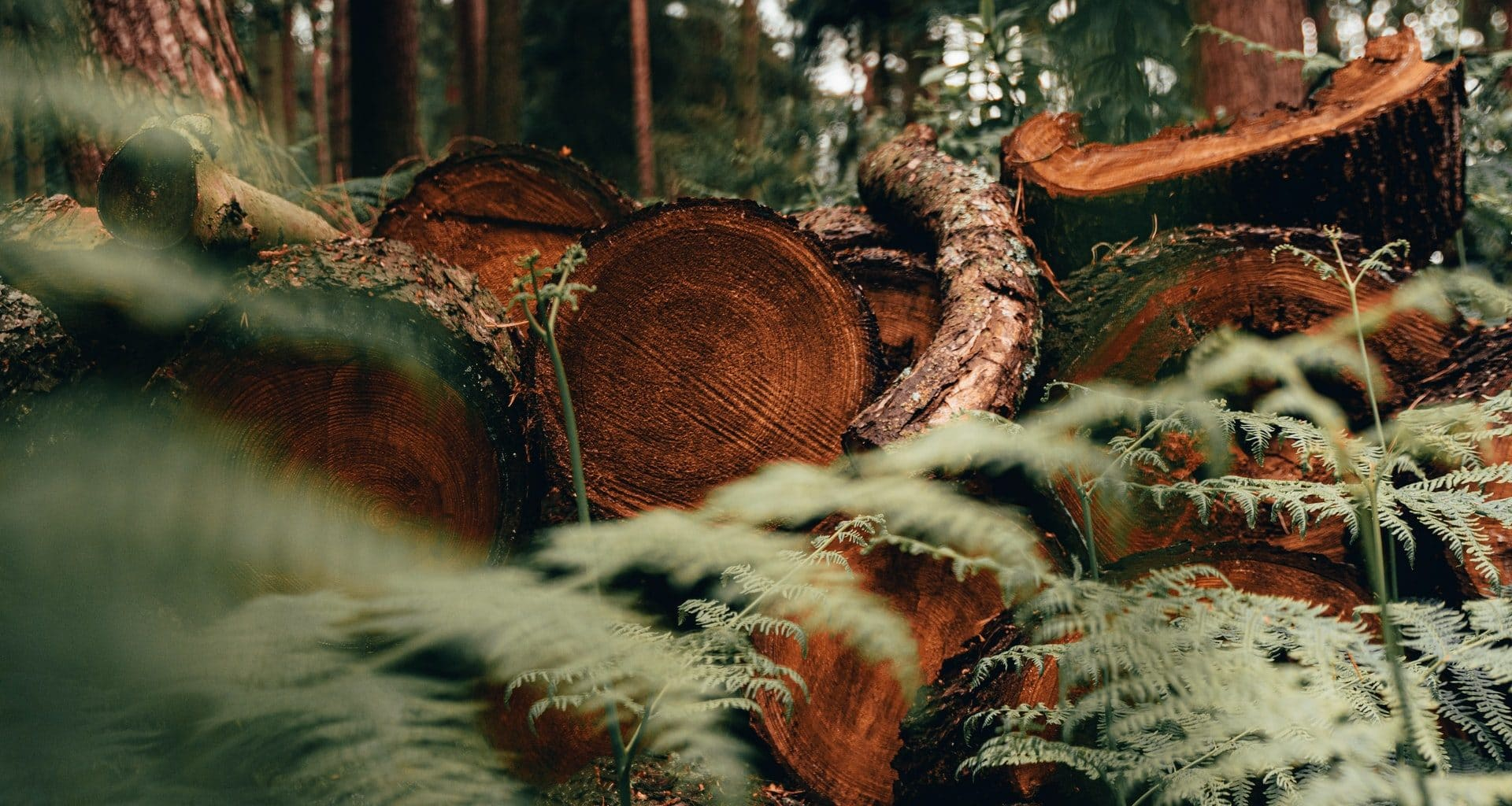 deforestation statistics - featured image