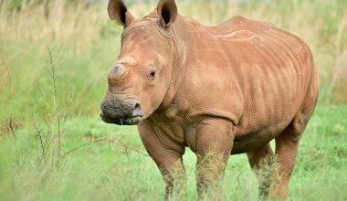 poaching statistics - featured image