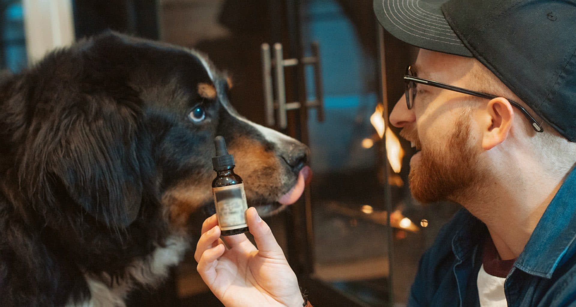 best cbd oil for dogs-featured image