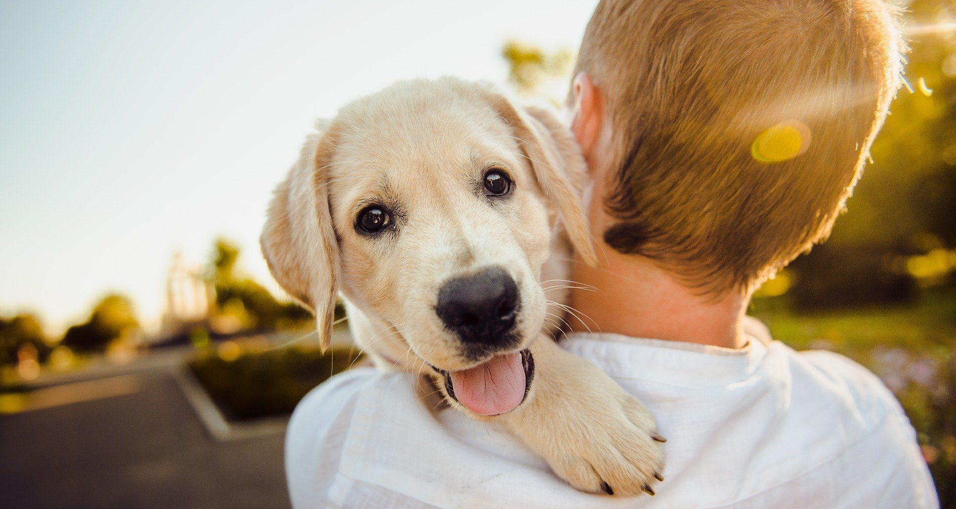best pet insurance - featured image