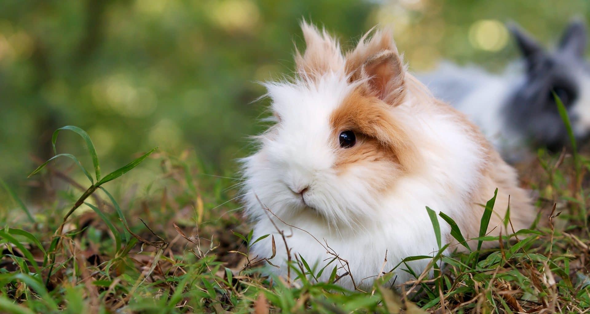 Petpedia Pet Company Reviews Header