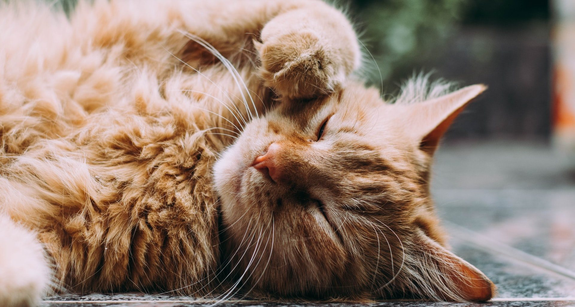 Best CBD Oil for Cats - Featured Image