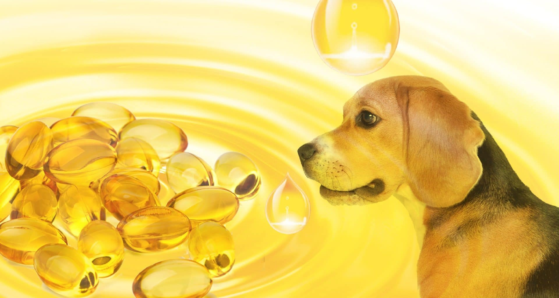 Best Fish Oil for Dogs - Featured Image