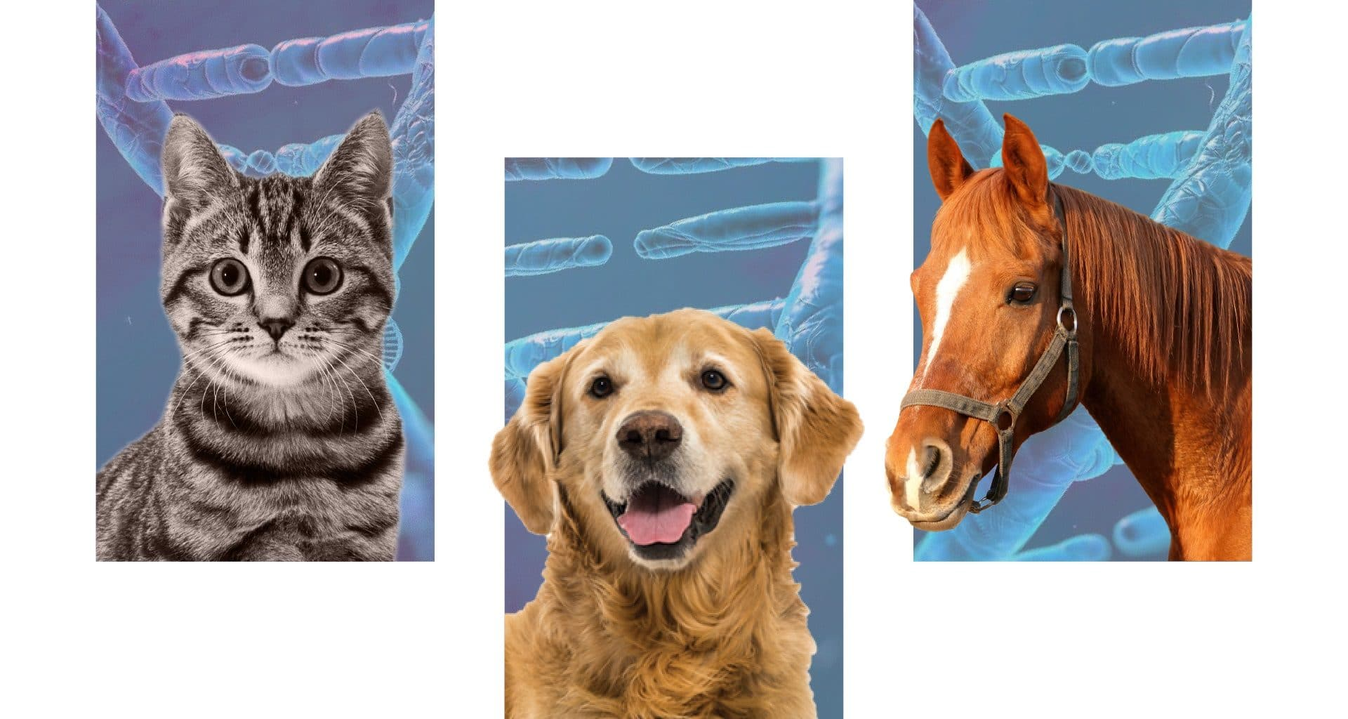Best Pet DNA Test Kits - Featured Image