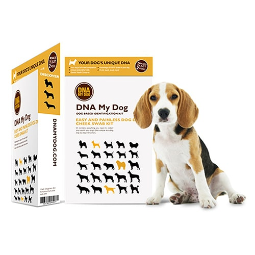 DNA My Dog Breed ID Test Kit Review