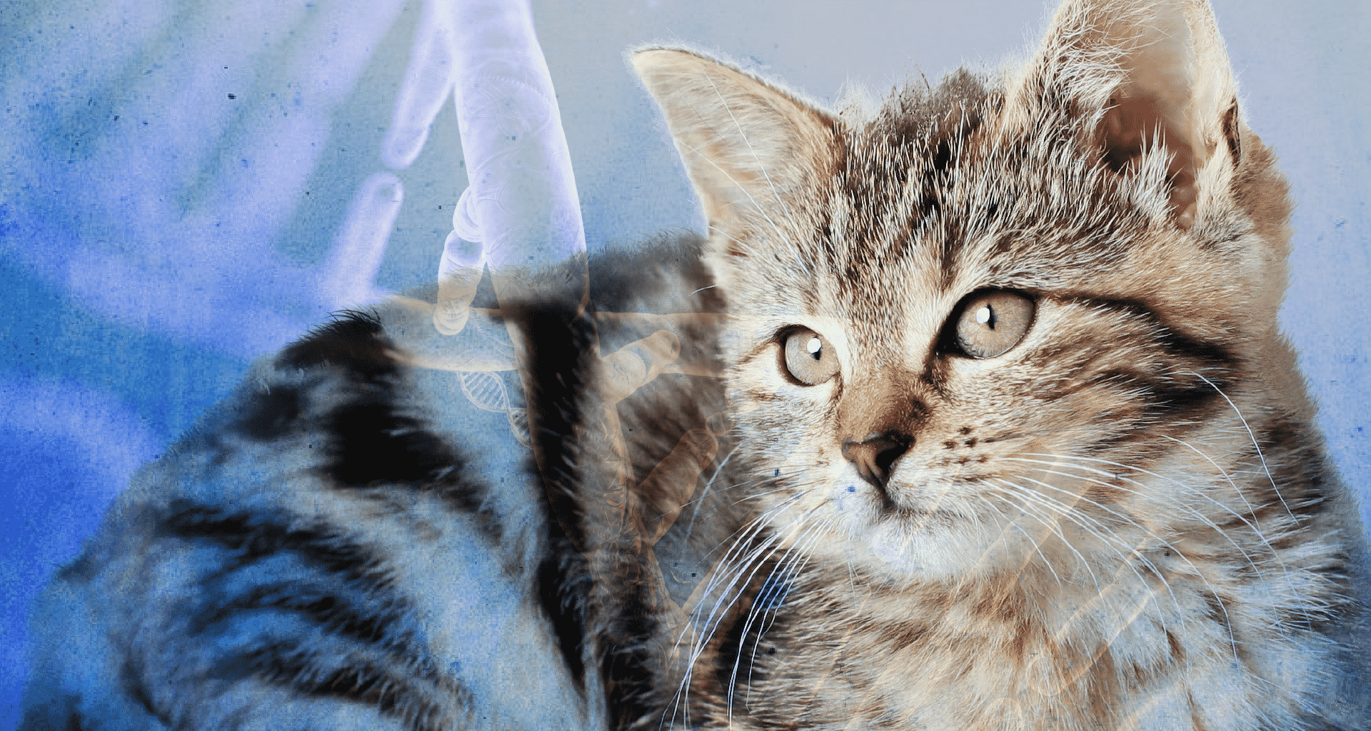 Best Cat DNA Tests - Featured Image