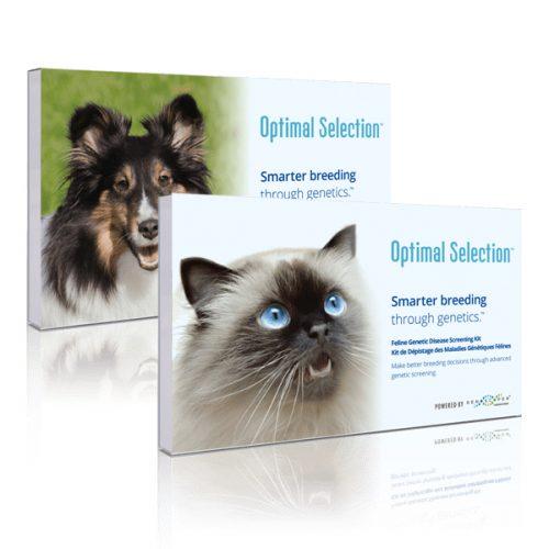 Optimal Selection Feline Test Kit Review