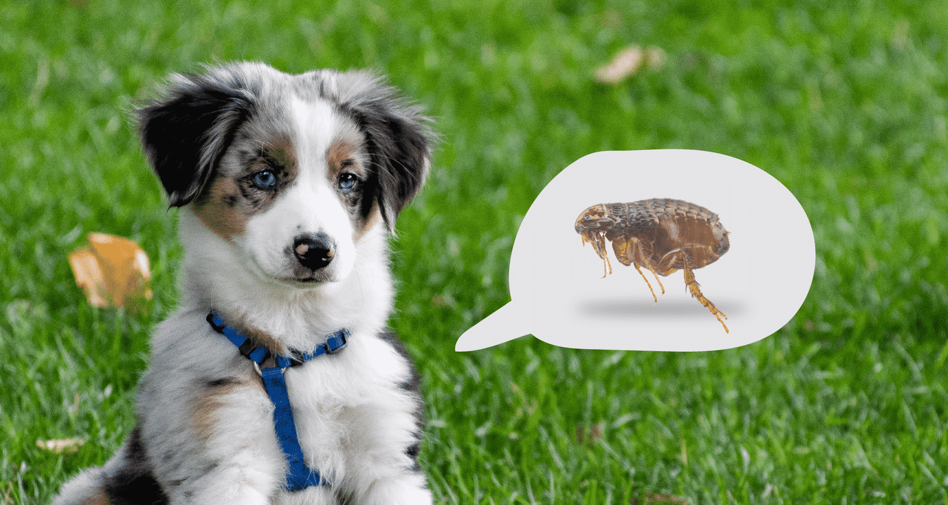 Best Flea Treatment for Dogs - Featured Image