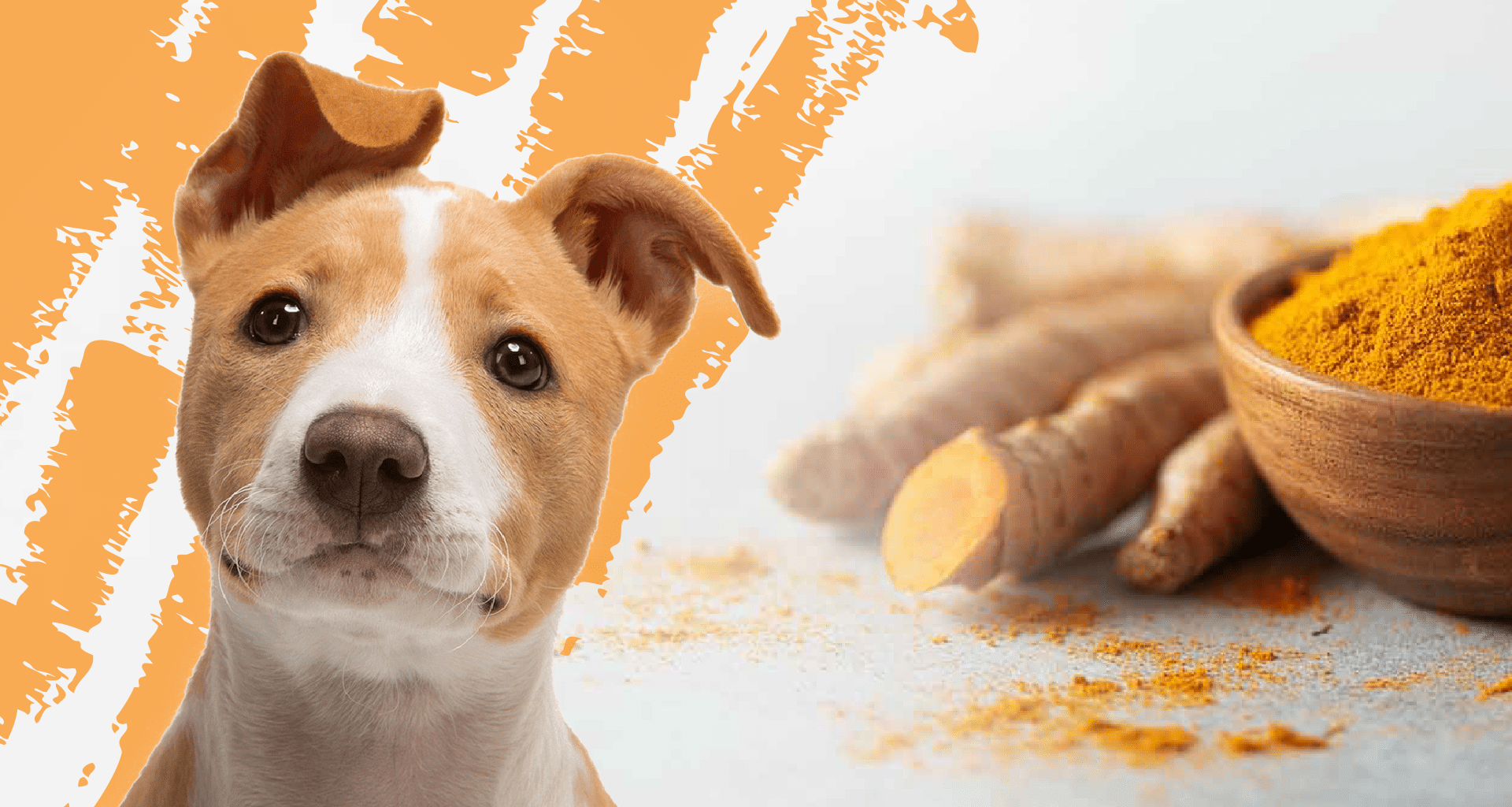 Best Turmeric Supplement for Dogs - Featured Image1