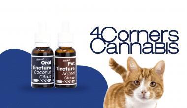 Feature-Image-4-corner-cannabis-01