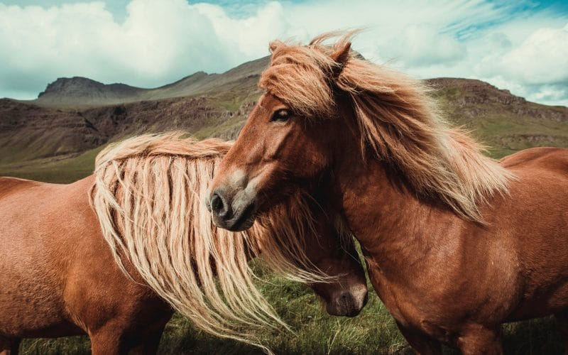 Best CBD Oil for Horses - Featured Image