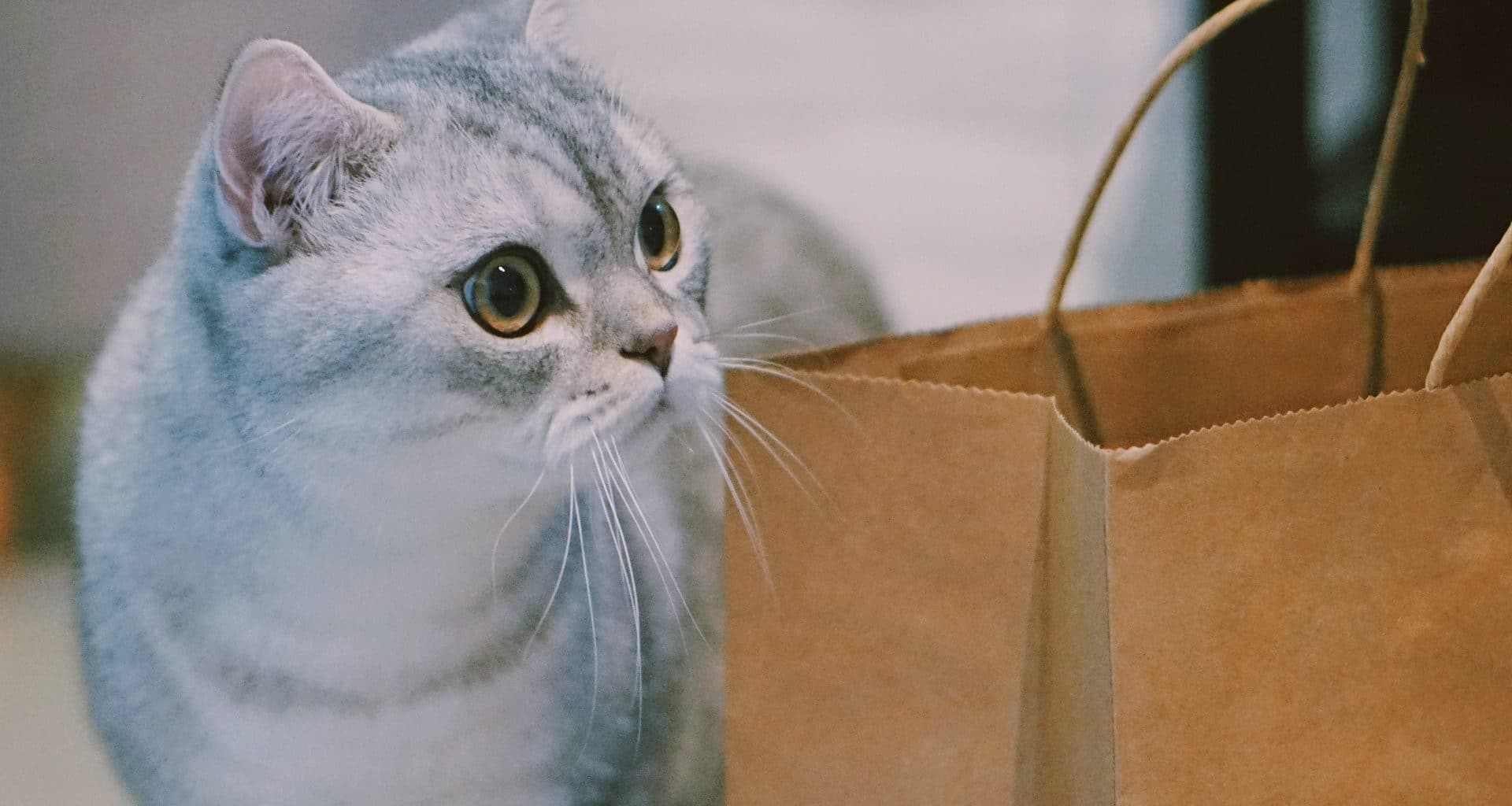 Best Cat Subscription Box - Featured Image