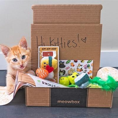 Best Cat Subscription Box - meowbox Review