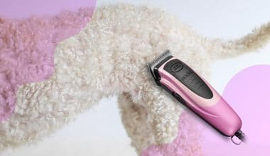 Best Dog Clippers - Feature Imaged