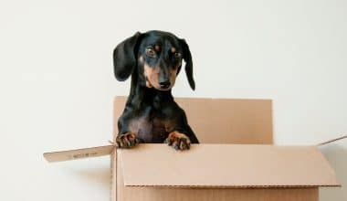 Best Dog Subscription Box - Featured Image