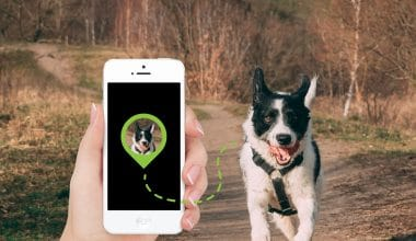 Best GPS Dog Collars - Featured Image