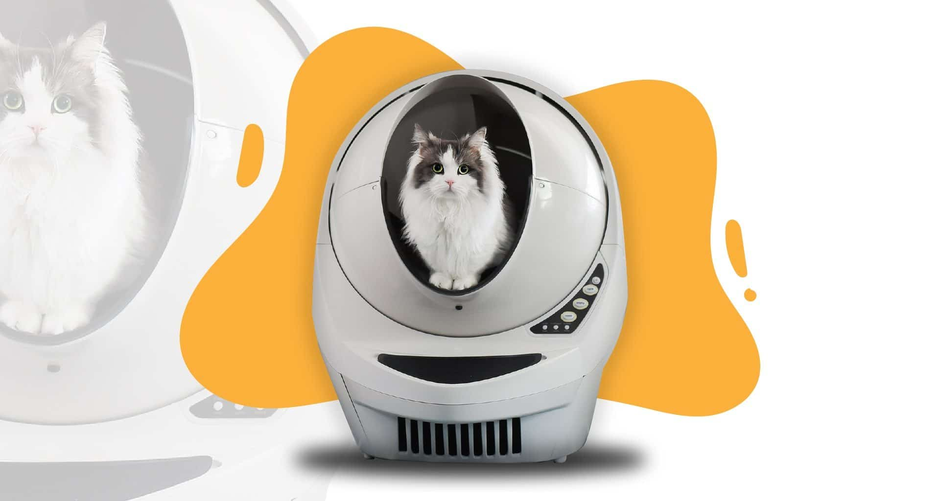 Best Self Cleaning Litter Box - Feature Image