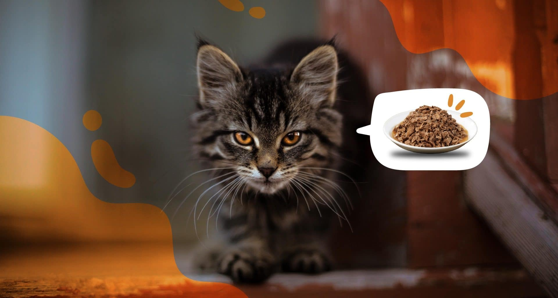 Best Wet Cat Food - Featured Image