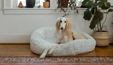 Best Dog Beds - Featured Image