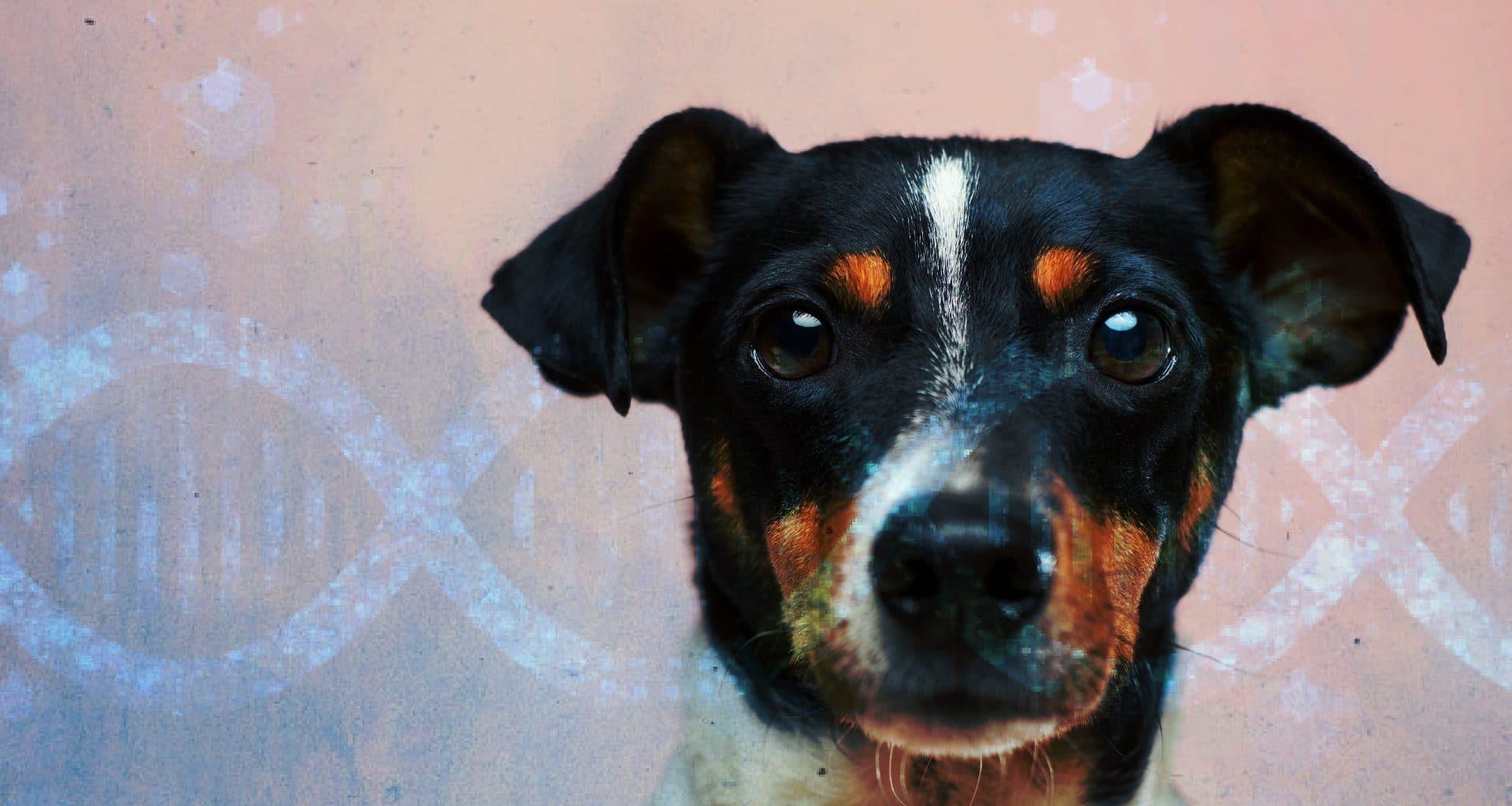 Best Dog DNA Test - Featured Image