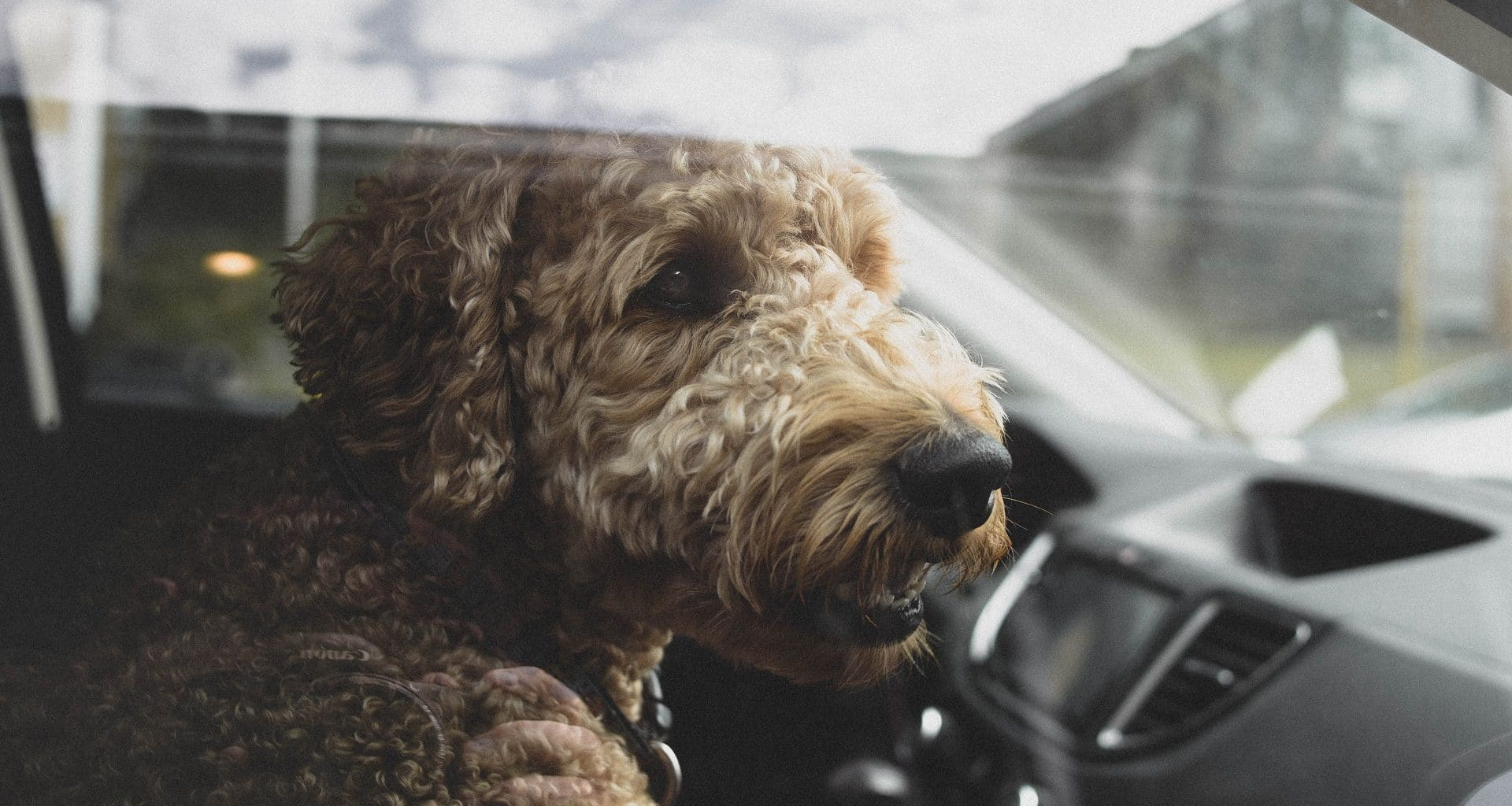 Best Dog Seat Belt - Featured Image