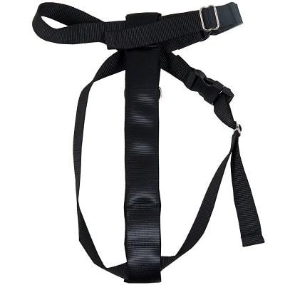 Best Dog Seat Belt - Petmate Seat Belt Travel Harness Review