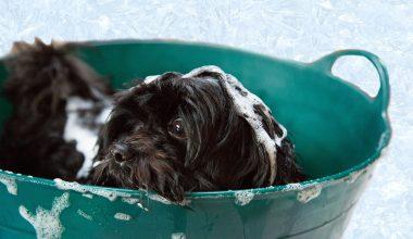 Best Dog Shampoo - Featured Image 1