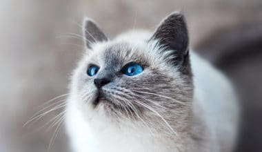 Best Litter Boxes - Featured Image