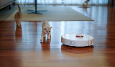 Best Robot Vacuum for Pet Hair - Featured Image