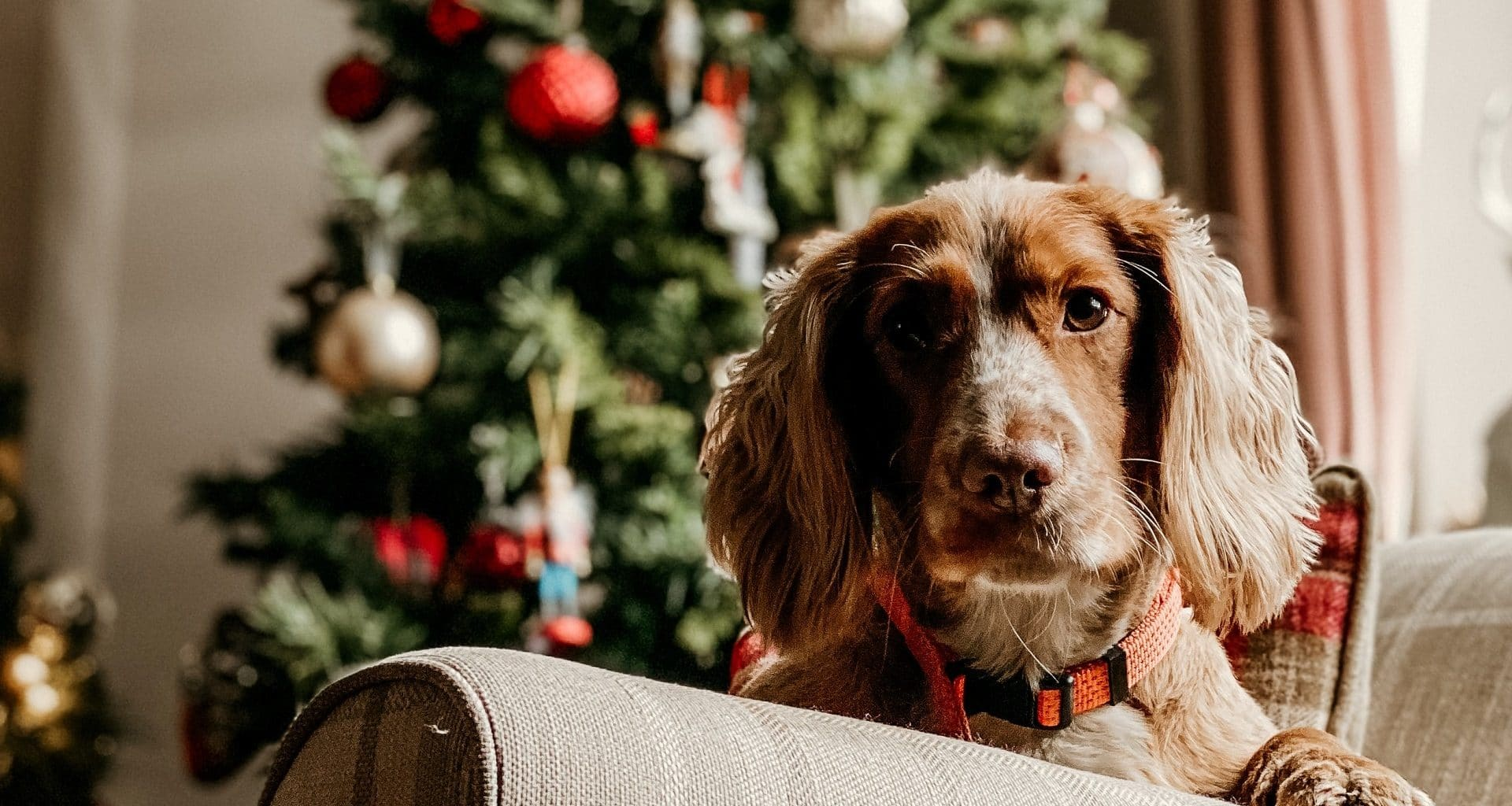 Best Gifts for Dog Owners and Dogs - Featured Image
