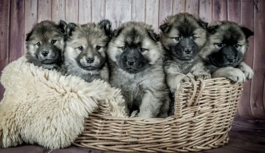 Best Large Breed Puppy Food - Featured Image