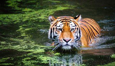 Endangered Species Statistics – Featured Image1