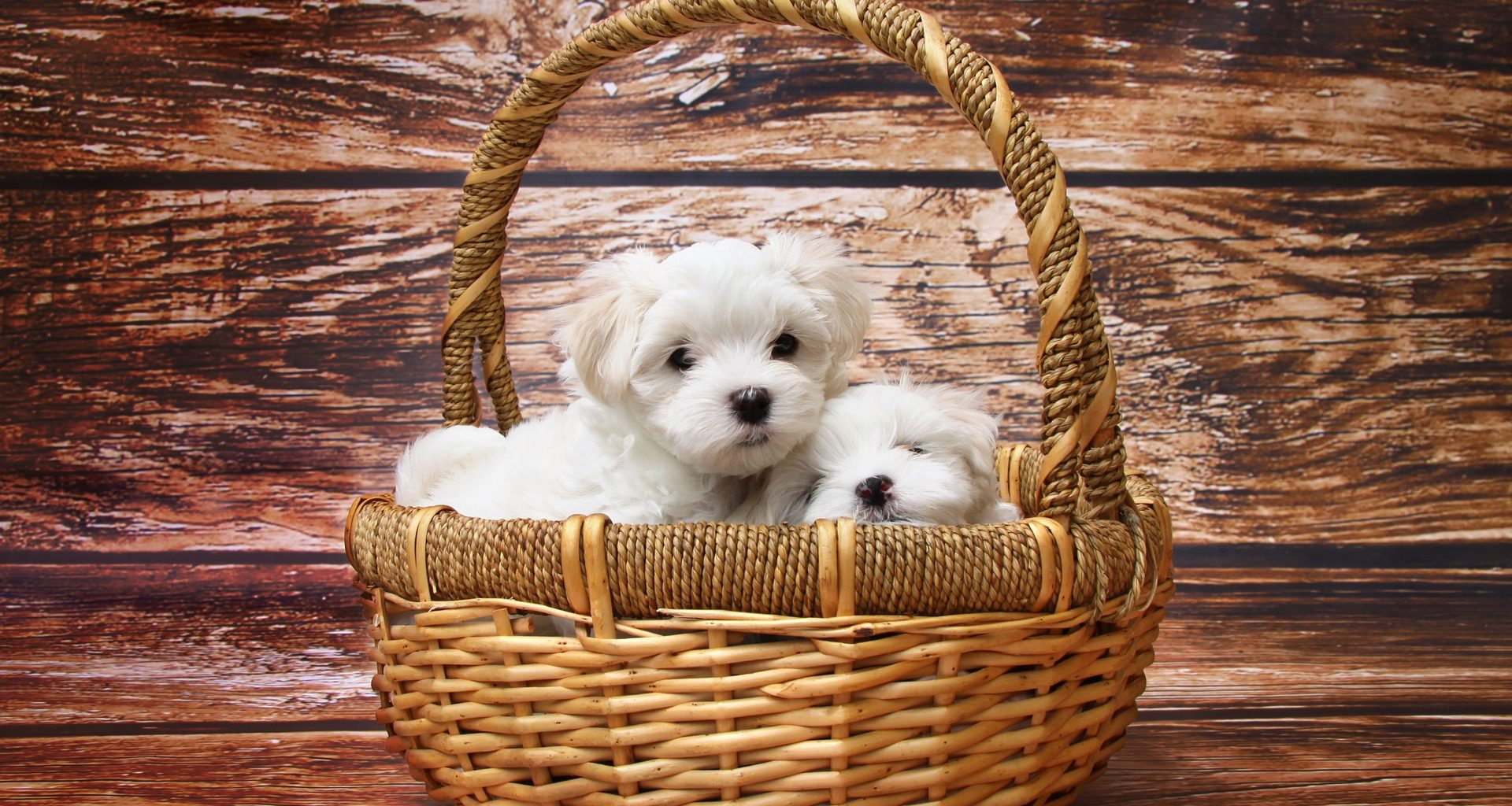 Best Gifts for Dogs - Featured Image