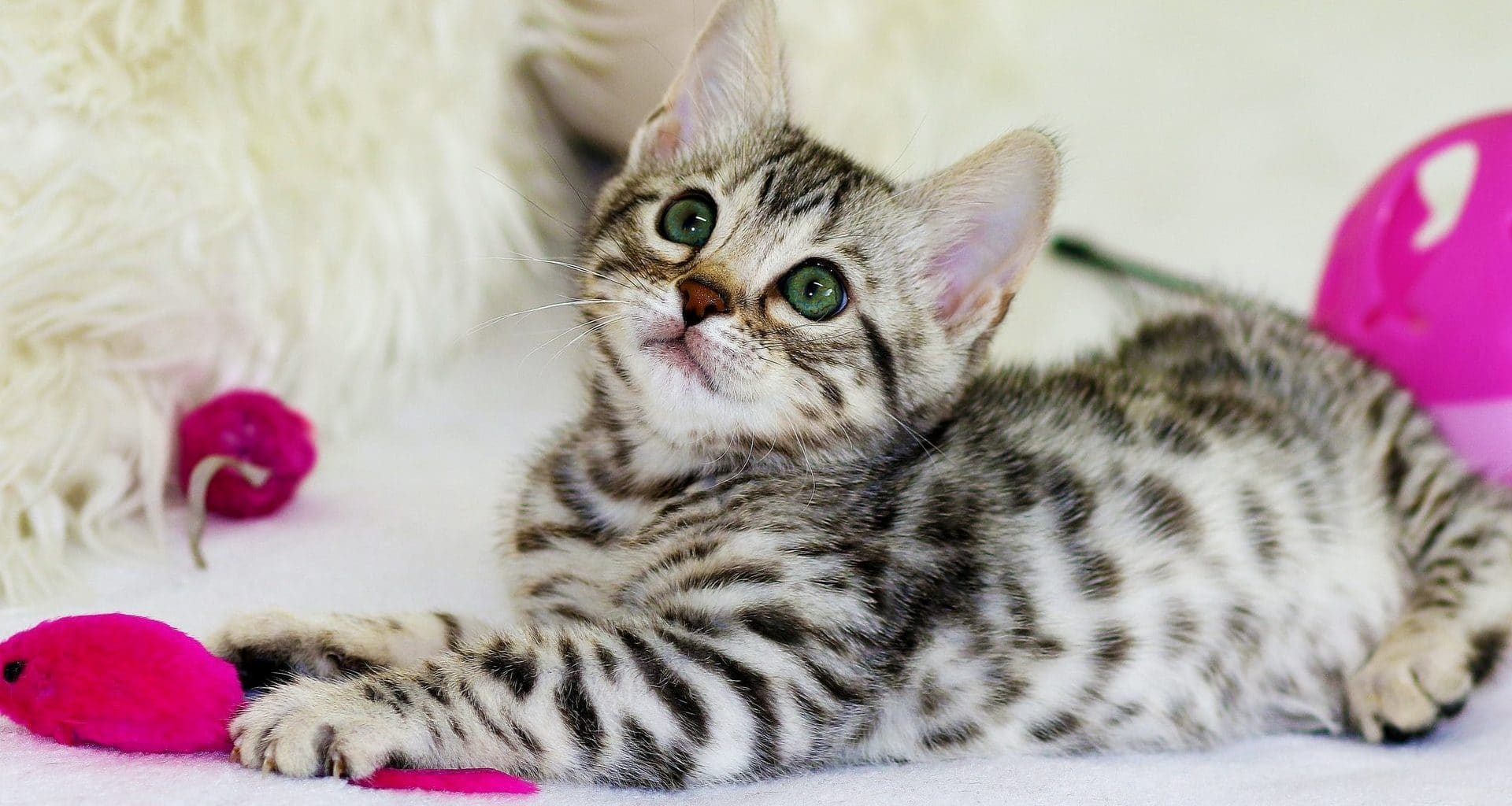 Best Gifts for Cats - Featured Image