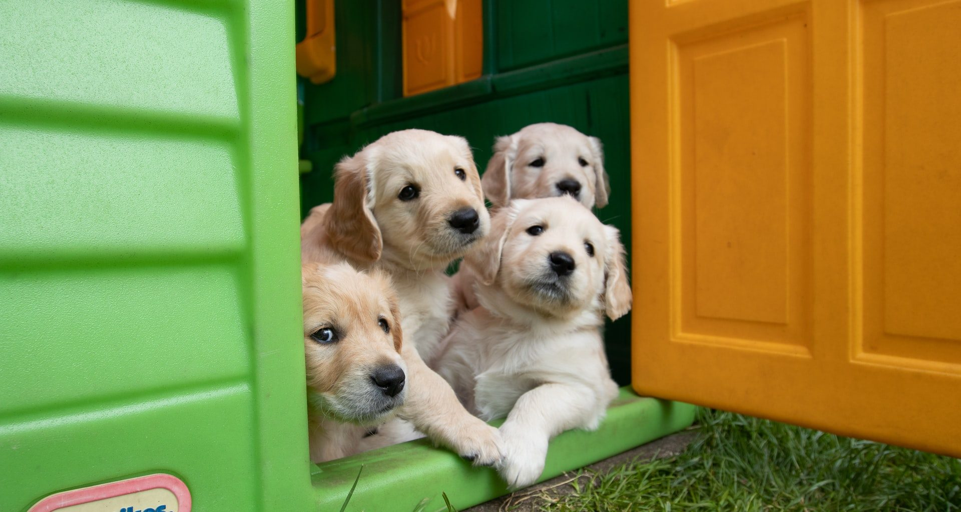 Best Dog Houses - Featured Image