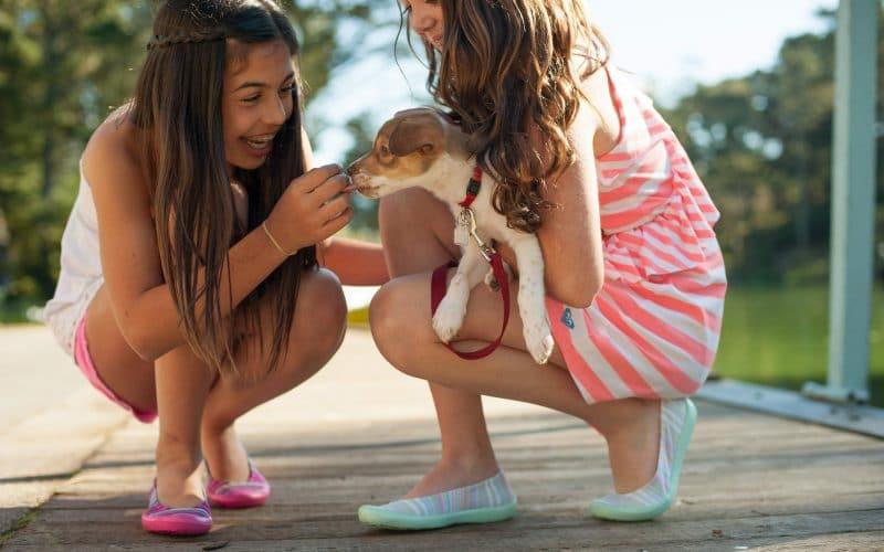 Barking Safety National Dog Bite Prevention Week - Featured Image