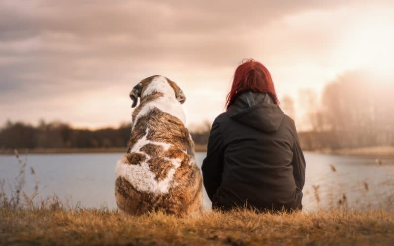 April 11 is National Pet Day - Featured Image