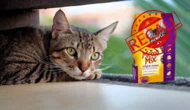 Meow Mix Recalls Due to Salmonella Risk - Featured Image