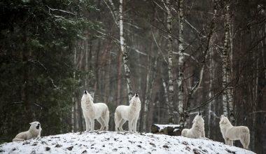 Montana Passes Nine Bills That Will Destroy Wildlife